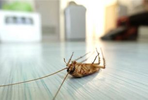 Best Termite Control Phoenix Specialists to Help You and Your Home